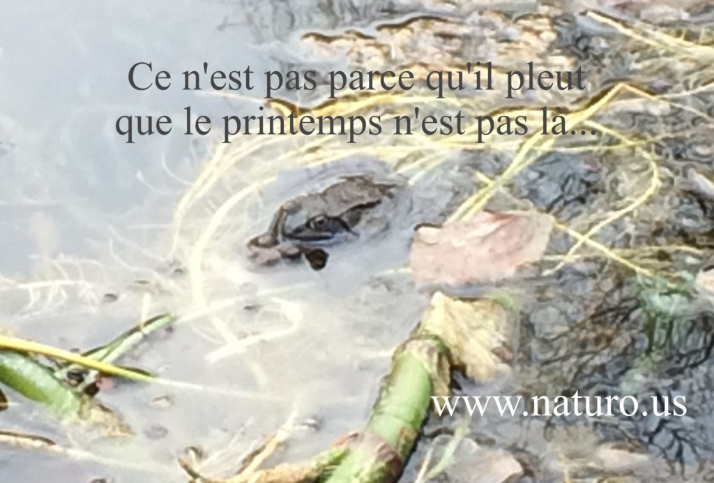 naturopathe, thérapeute de couple, bruxelles, lasne, perpignan, belgique, naturopathie, therapie, energeticien, energetique, formation therapeute, preparation naissance, suivi post partum, coach, sportif, deuil, therapie de couple, changement de carriere, mal de dos, stress, deprime, burn out, traitement burn out bruxelles, Lasne, examens, rester en bonne sante, sommeil, poids, anorexie, boulimie, orthorexie, fatigue chronique, confiance en soi, analyse des cheveux, constipation, coach de vie.